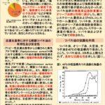椿油の機能性について